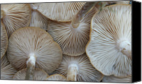 Natural Pattern Photo Canvas Prints - Underside Of Mushrooms Canvas Print by Greg Adams Photography