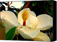 Magnolias Canvas Prints - Unfolding Beauty Canvas Print by Karen Wiles