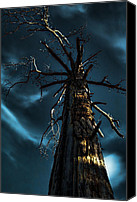Gnarly Canvas Prints - Up a Tree Canvas Print by Bonnie Bruno