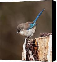 Wren Digital Art Canvas Prints - Up Here Canvas Print by Heather Thorning