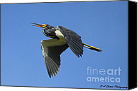 Florida Nature Photography Canvas Prints - Up Up and Away Canvas Print by Barbara Bowen