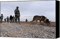 Iraq Canvas Prints - Us Soldier And His Working Dog Search Canvas Print by Everett