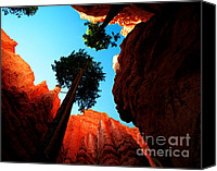 Bryce Canyon Canvas Prints - Utah - Navajo Loop 4 Canvas Print by Terry Elniski