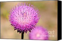 Invasive Canvas Prints - Utah Thistle Flower Canvas Print by Gary Whitton