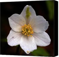 Thimbleweed Canvas Prints - Vanishing beauty 2 Canvas Print by Jouko Lehto