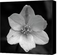 Thimbleweed Canvas Prints - Vanishing beauty 3 Canvas Print by Jouko Lehto