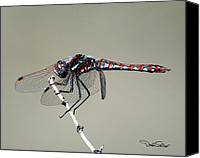 Meadowhawk Canvas Prints - Variegated Meadowhawk Canvas Print by David Salter