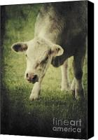 Cow Mixed Media Canvas Prints - Vegetaria Canvas Print by Angela Doelling AD DESIGN Photo and PhotoArt
