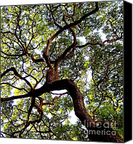 Live Oaks Canvas Prints - Veins of Life Canvas Print by Karen Wiles