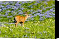 Buck Canvas Prints - Velvet on Lupine Canvas Print by Mike  Dawson