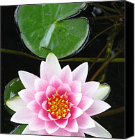 Debbie Finley Canvas Prints - Vertical Water Lily Canvas Print by Debbie Finley