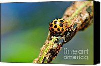 Eaten Canvas Prints - Very Hungry Ladybird 2 Canvas Print by Kaye Menner