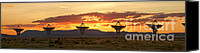 Future Tech Canvas Prints - Very Large Array at Sunset Canvas Print by Matt Tilghman
