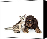 Domestic Animals Photography Canvas Prints - Very Sweet Kitten Lying On Puppy Canvas Print by StockImage