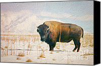 Bison Canvas Prints - Vestige of the Old West Canvas Print by Carolyn Rauh