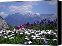 Flowers Pyrography Canvas Prints - View from the Patio Canvas Print by Robin Webster