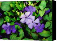 Vinca Flowers Canvas Prints - Vinca Canvas Print by Sandy MacGowan