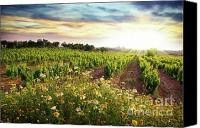 Rural Scenery Canvas Prints - Vineyard Canvas Print by Carlos Caetano