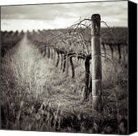 Wooden Post Canvas Prints - Vineyard In Winter Canvas Print by Sue Hammond