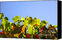 Sunny Vineyard Photo Canvas Prints - Vineyard Leaves Canvas Print by Carlos Caetano