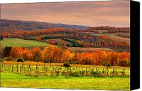 Fall Scenes Canvas Prints - Vineyard of Sunset Canvas Print by Emily Stauring