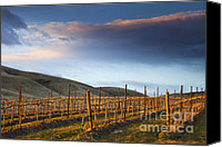 Storm Canvas Prints - Vineyard Storm Canvas Print by Mike  Dawson