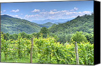 Mary Anne Baker Canvas Prints - Vineyard Vista Canvas Print by Mary Anne Baker