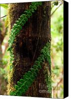 Puerto Rico Photo Canvas Prints - Vining Fern on Sierra Palm Tree Canvas Print by Thomas R Fletcher
