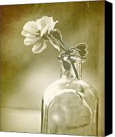 Still Life Digital Art Canvas Prints - Vintage Geranium Canvas Print by Amy Neal