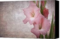 Parchment Canvas Prints - Vintage gladioli Canvas Print by Jane Rix