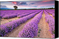 Lavender Canvas Prints - Violet Dreams Canvas Print by Evgeni Dinev