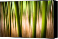 Canvas Greeting Cards Canvas Prints - Vitality - Abstract Panning Bamboo Landscape Photography Canvas Print by Dave Allen