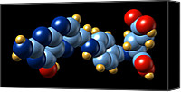 Complex Canvas Prints - Vitamin B9, Molecular Model Canvas Print by Dr Mark J. Winter