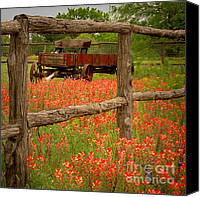 Blue Flowers Canvas Prints - Wagon in Paintbrush - Texas Wildflowers wagon fence landscape flowers Canvas Print by Jon Holiday