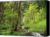 Wahkeena Creek Canvas Prints - Wahkeena Falls Rain Forest Canvas Print by Charles Robinson