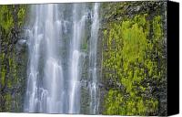 Water Art Canvas Prints - Waimoku Falls and Moss Canvas Print by Greg Vaughn - Printscapes