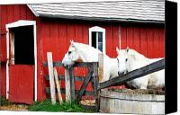Barn Digital Art Canvas Prints - Waiting     Canvas Print by Lyle  Huisken