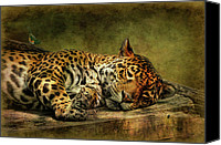 Leopards Canvas Prints - Wake Up Sleepyhead Canvas Print by Lois Bryan