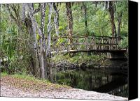 Florida Nature Photography Canvas Prints - Walk in the Park Canvas Print by Carolyn Marshall