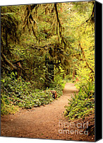 Olympic National Park Canvas Prints - Walk Into the Forest Canvas Print by Carol Groenen