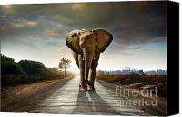 Five Canvas Prints - Walking Elephant Canvas Print by Carlos Caetano