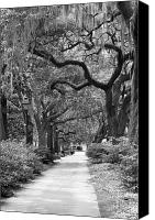 Park Benches Canvas Prints - Walking Through the Park in Black and White Canvas Print by Suzanne Gaff