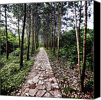 Signed Canvas Prints - Walkway Canvas Print by Skip Nall