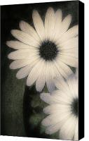 Steve Sharp Canvas Prints - Wallflower Canvas Print by Steve Sharp