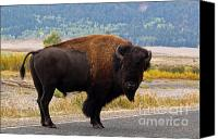 Bison Canvas Prints - Wandering Bison Canvas Print by Alex Cassels