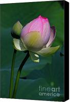 Lotus Bud Canvas Prints - Wanna Kiss Canvas Print by Byron Varvarigos