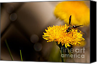 Featured Special Promotions - Wasp and Flower  Canvas Print by Venura Herath