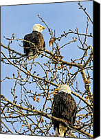 Eagle Watching Canvas Prints - Watchers Canvas Print by Lawrence Christopher