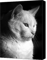 Black And White Photography Photo Canvas Prints - Watchful Canvas Print by Bob Orsillo