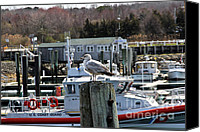 Cape Cod Scenery Canvas Prints - Watchful Canvas Print by Extrospection Art